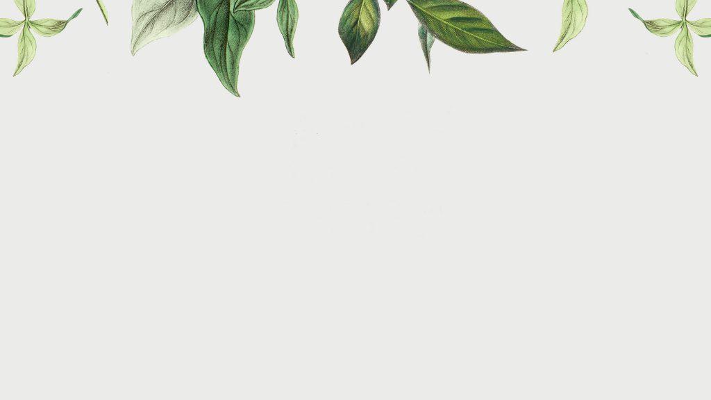 Bladeren van planten